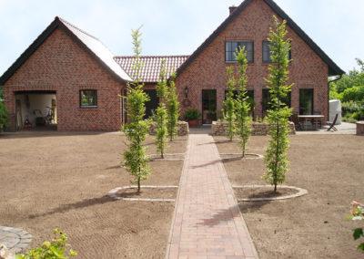 Neuanlage der Rasenfläche und Säulenhainbuchen als Wegbepflanzung